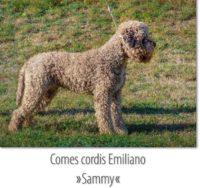 Comes cordis Emiliano 2018-09-11.jpg